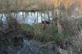 Skażenie wód Nurca olejem opałowym  ::